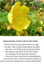 Hypericum och bärfisen