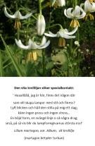 Kroll-liljan söker formgivare