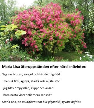 Maria Lisas drama