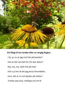 Telekia speciosa och ett bi