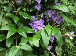 Botaniska2