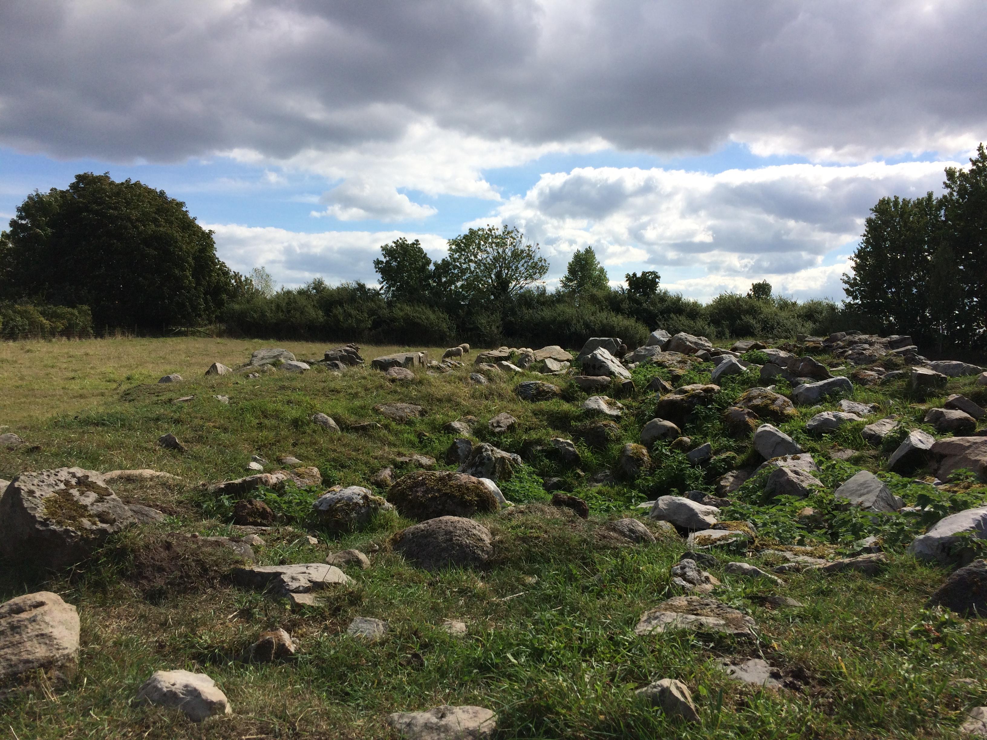 Gladsax kyrkogård Identefiering av träd (6)