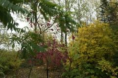 Från vår lilla skog