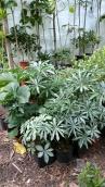 Linudden växtförsäljning