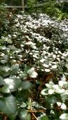 Linuddens Trädgård