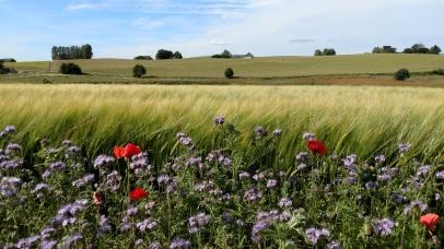Där som sädesfälten böja sig för vinden