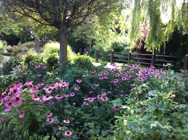 Pionpark m Echinacea (Medium)