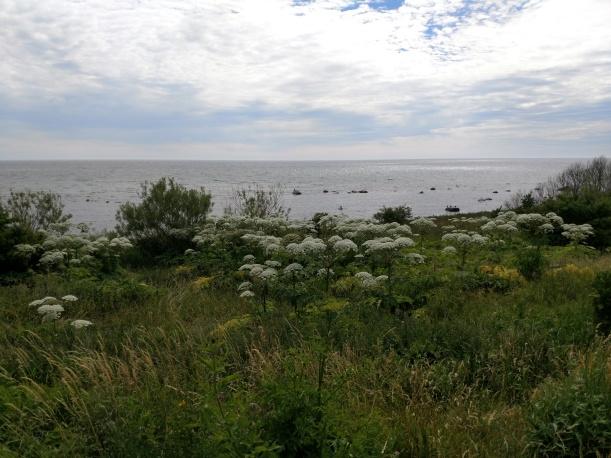 20180625 Havet vid Hörte