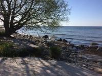 IMG Träd hav