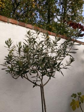 20181009 många oliver