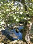 20181025 Krka träd o vatten