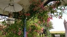 rosor 20170705 mozart inifrån verandan