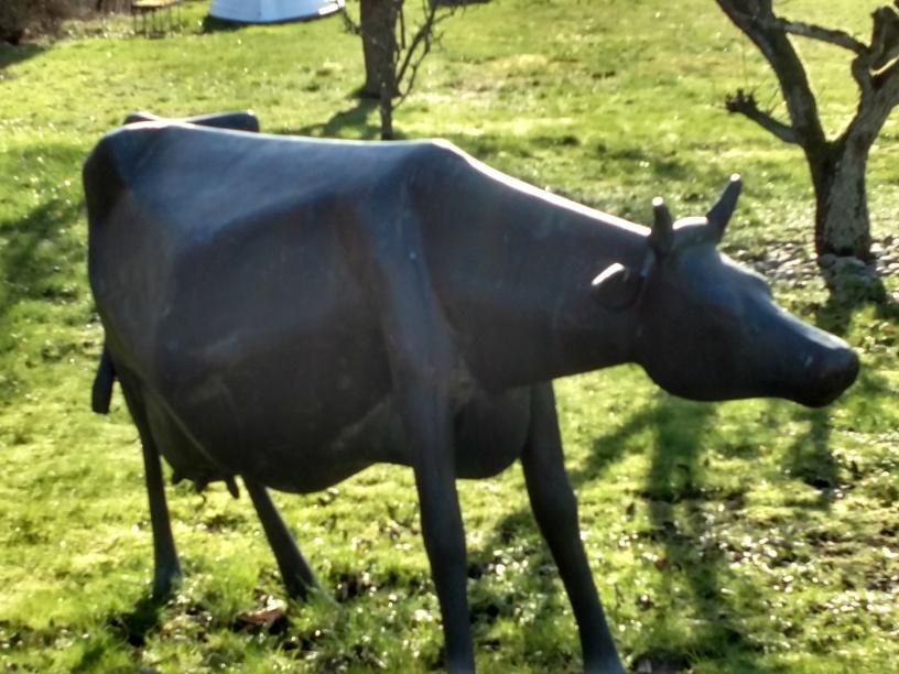 20200228 Abbekås ko nära